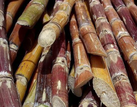 Sugar Cane Bagasse Range